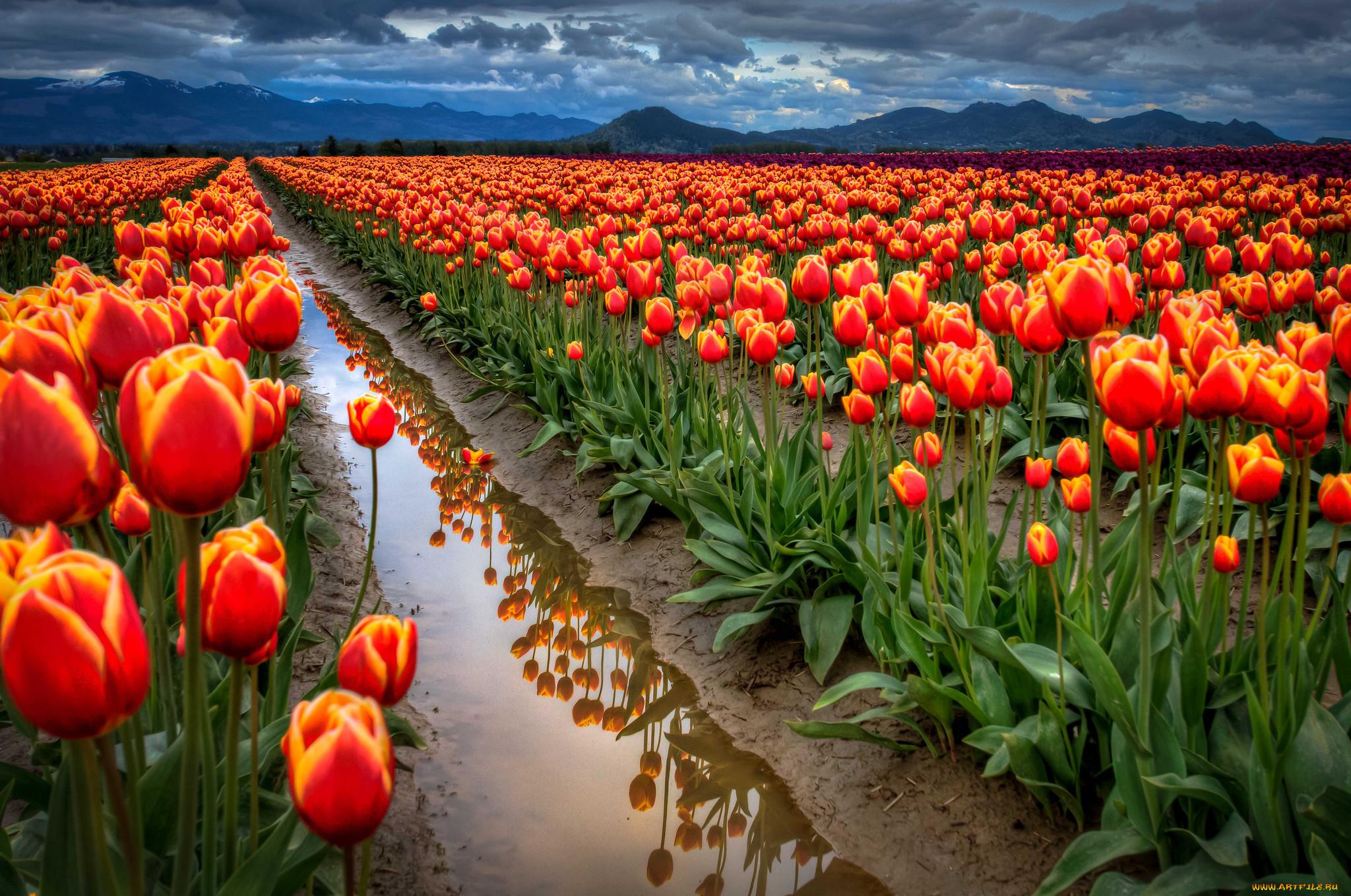 Картинки о цветы